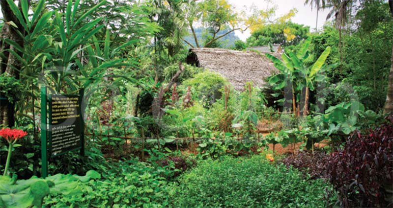 The good earth for Home landscape design sri lanka